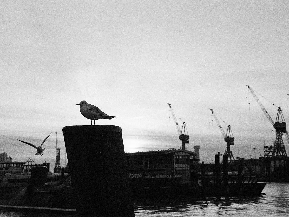 Hamburg Harbour Silhouette